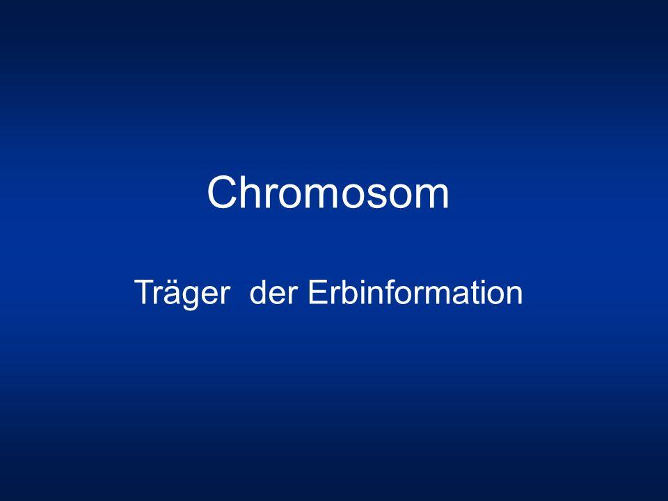 Chromosom Träger der Erbinformation