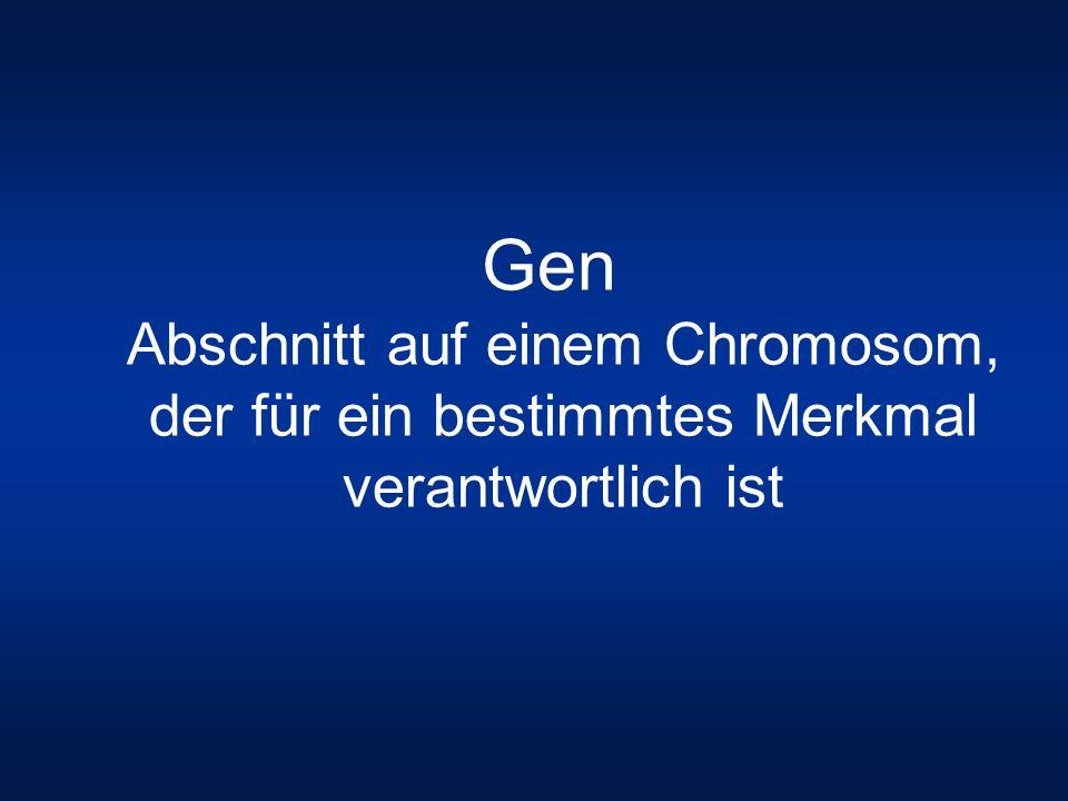 Gen Abschnitt auf einem Chromosom, der für ein bestimmtes Merkmal verantwortlich ist
