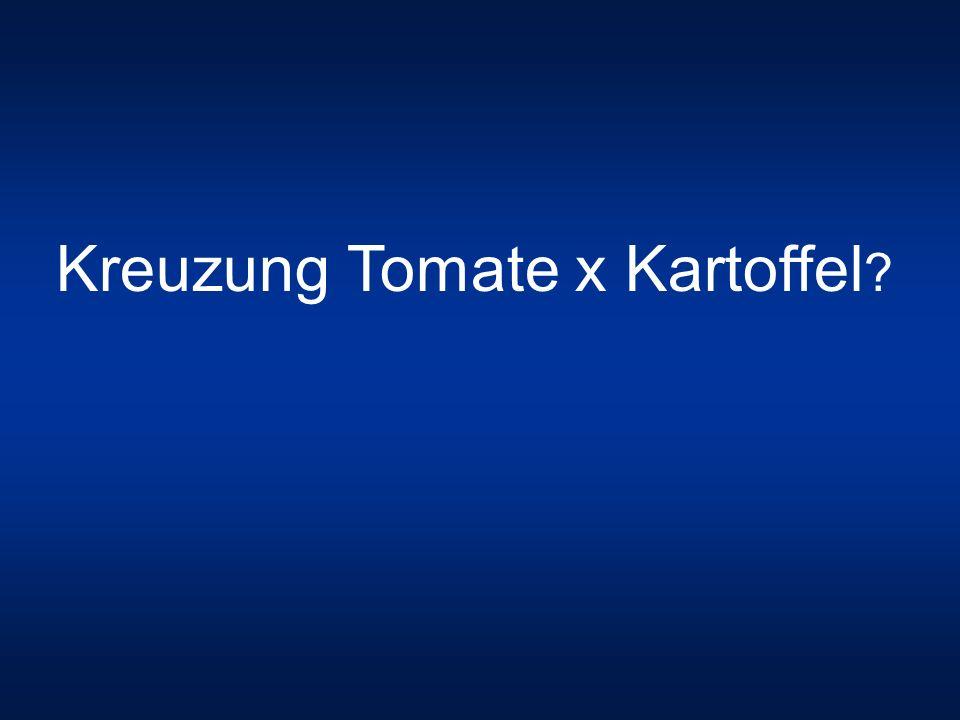 Kreuzung Tomate x Kartoffel ?