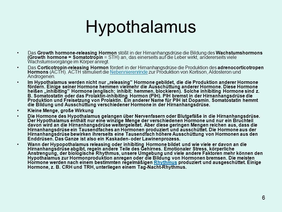 6 Hypothalamus Das Growth hormone-releasing Hormon stößt in der Hirnanhangsdrüse die Bildung des Wachstumshormons (Growth hormone = Somatotropin = STH