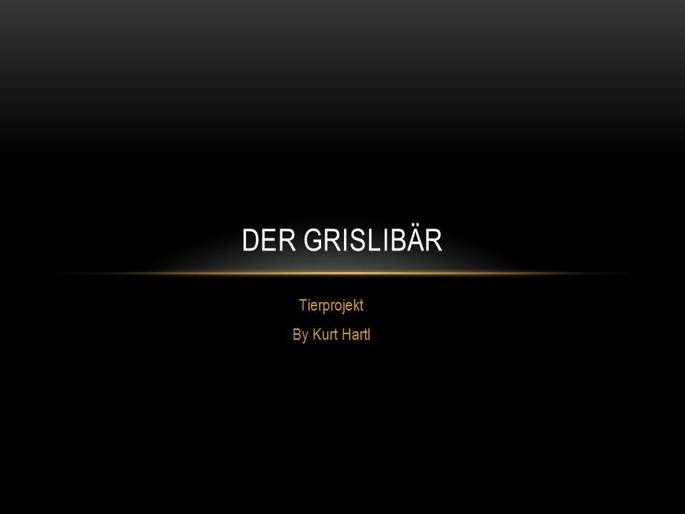 Tierprojekt By Kurt Hartl DER GRISLIBÄR