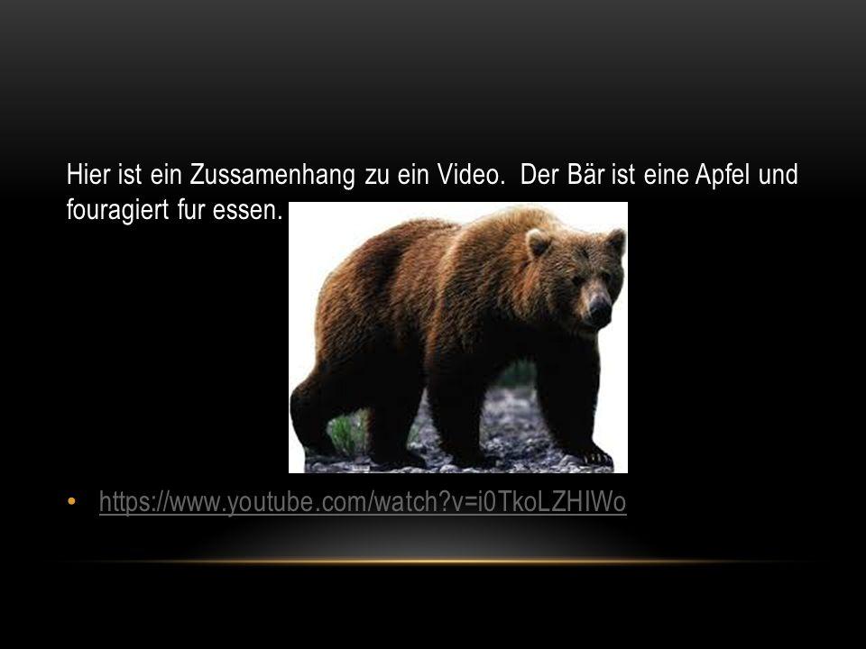 Hier ist ein Zussamenhang zu ein Video. Der Bär ist eine Apfel und fouragiert fur essen.