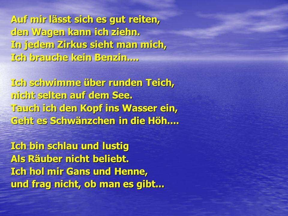 «Как разговаривают эти животные» Der Papagei kann.....