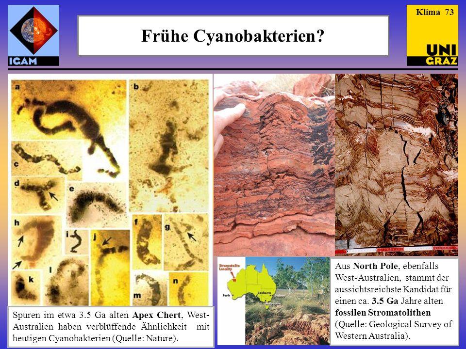 Frühe Cyanobakterien? Aus North Pole, ebenfalls West-Australien, stammt der aussichtsreichste Kandidat für einen ca. 3.5 Ga Jahre alten fossilen Strom