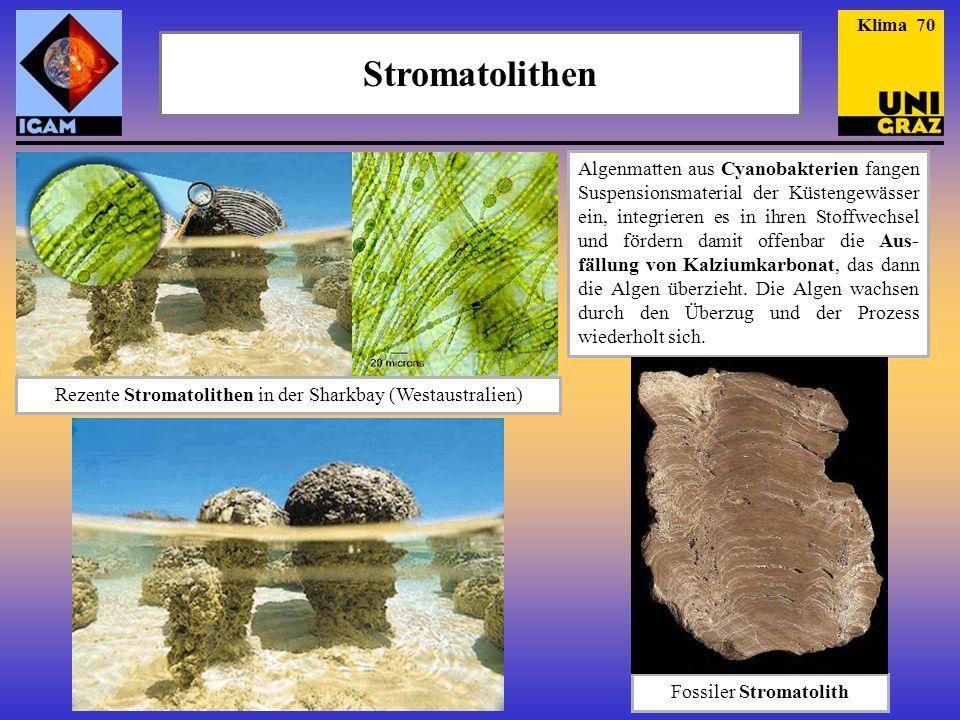 Stromatolithen Rezente Stromatolithen in der Sharkbay (Westaustralien) Fossiler Stromatolith Algenmatten aus Cyanobakterien fangen Suspensionsmaterial der Küstengewässer ein, integrieren es in ihren Stoffwechsel und fördern damit offenbar die Aus- fällung von Kalziumkarbonat, das dann die Algen überzieht.