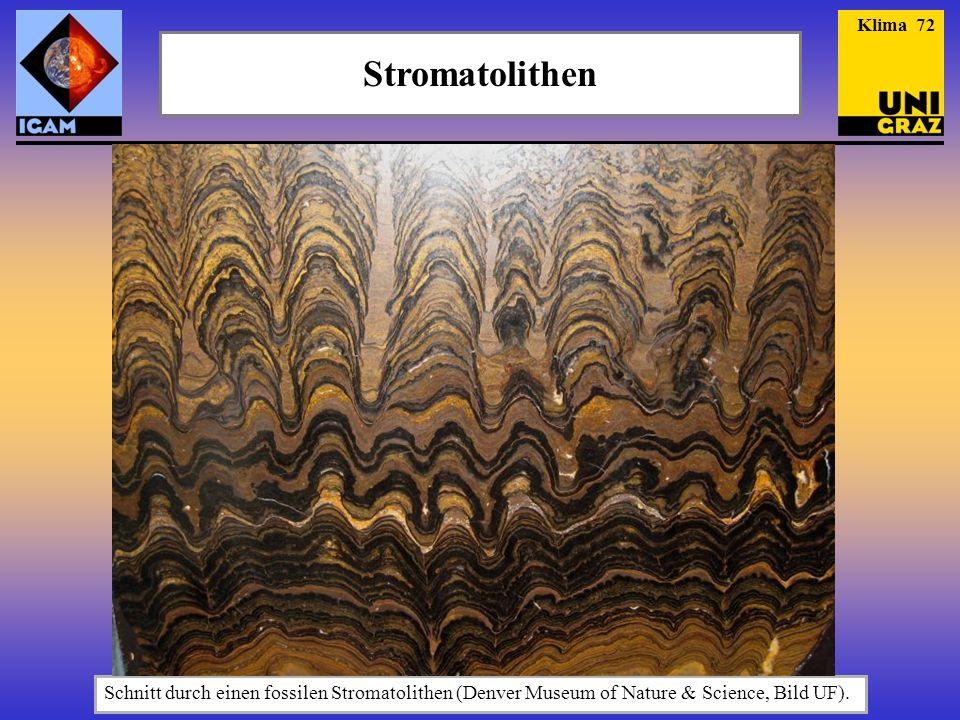 Stromatolithen Schnitt durch einen fossilen Stromatolithen (Denver Museum of Nature & Science, Bild UF).