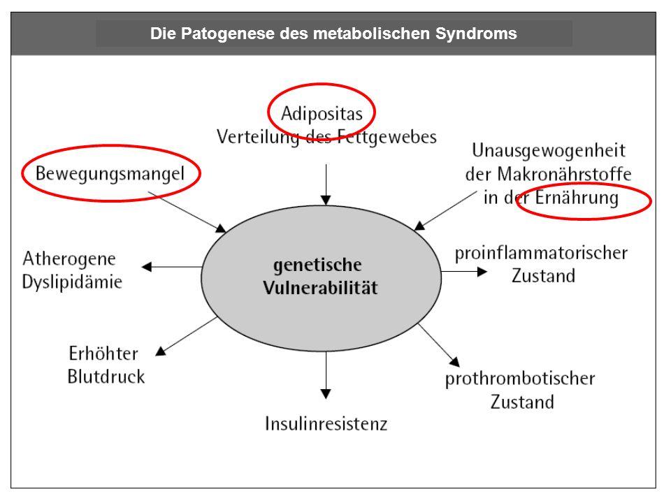 Die Patogenese des metabolischen Syndroms