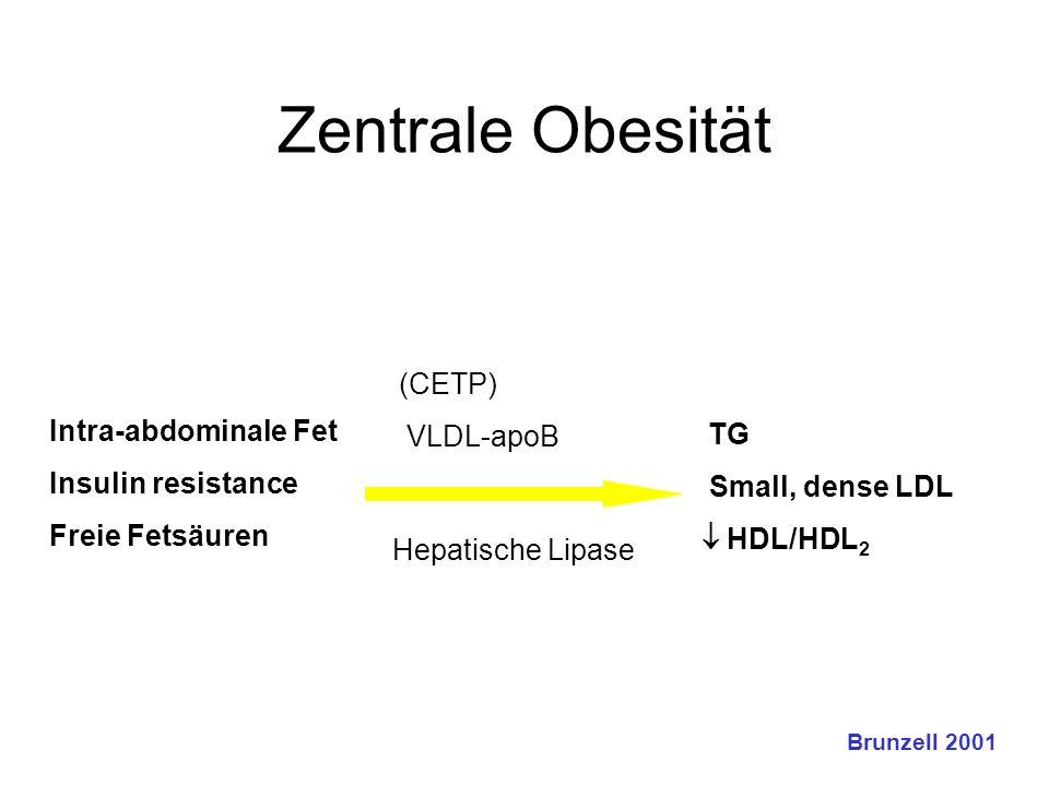 Zentrale Obesität (CETP)  VLDL-apoB  Intra-abdominale Fet  Insulin resistance  Freie Fetsäuren  Hepatische Lipase  TG  Small, dense LDL  HDL/
