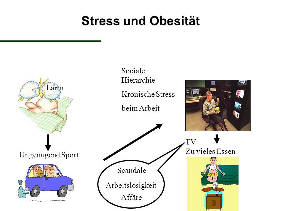 Stress und Obesität Sociale Hierarchie Kronische Stress beim Arbeit Ungenügend Sport TV Arbeitslosigkeit Scandale Affäre Lärm Zu vieles Essen