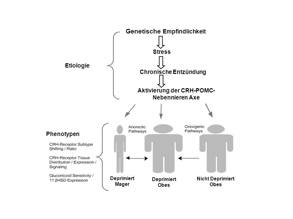 Genetische Empfindlichkeit Stress Chronische Entzündung Aktivierung der CRH-POMC- Nebennieren Axe Etiologie Phenotypen Deprimiert Mager Deprimiert Obe