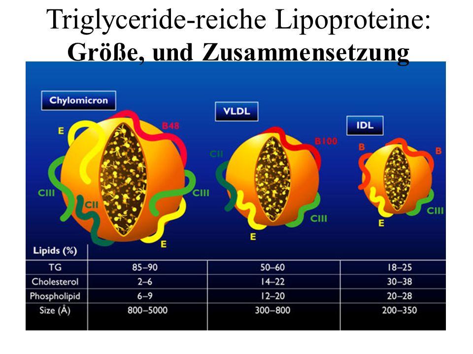 Triglyceride-reiche Lipoproteine: Größe, und Zusammensetzung