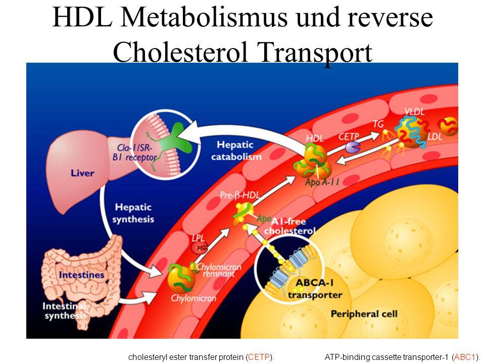 HDL Metabolismus und reverse Cholesterol Transport ATP-binding cassette transporter-1 (ABC1).cholesteryl ester transfer protein (CETP).