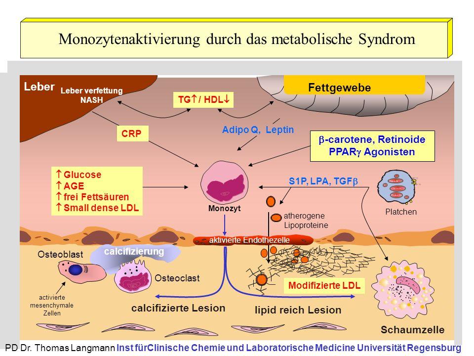 Monozytenaktivierung durch das metabolische Syndrom Monozyt Schaumzelle calcifizierte Lesion lipid reich Lesion Leber S1P, LPA, TGF  Adipo Q, Leptin