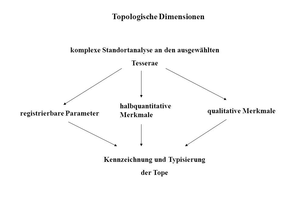 Topologische Dimensionen komplexe Standortanalyse an den ausgewählten Tesserae registrierbare Parameter halbquantitative Merkmale qualitative Merkmale