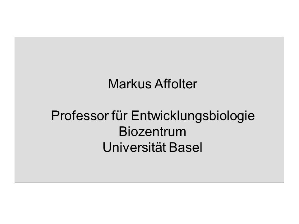 Markus Affolter Professor für Entwicklungsbiologie Biozentrum Universität Basel