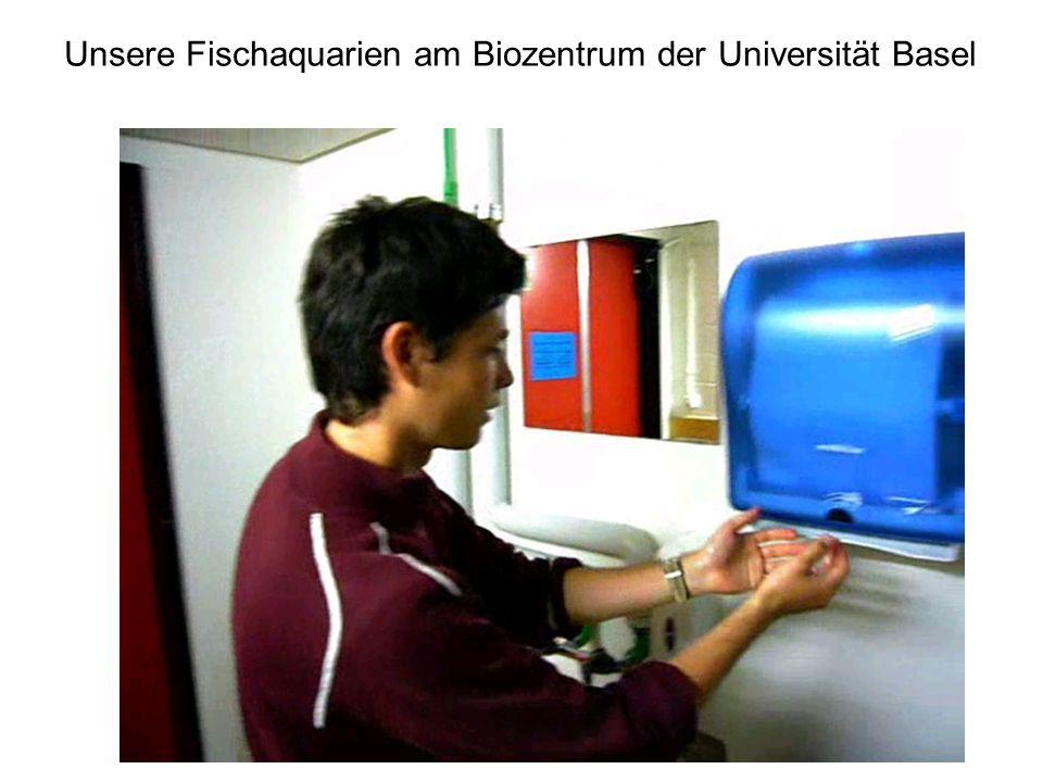 Unsere Fischaquarien am Biozentrum der Universität Basel
