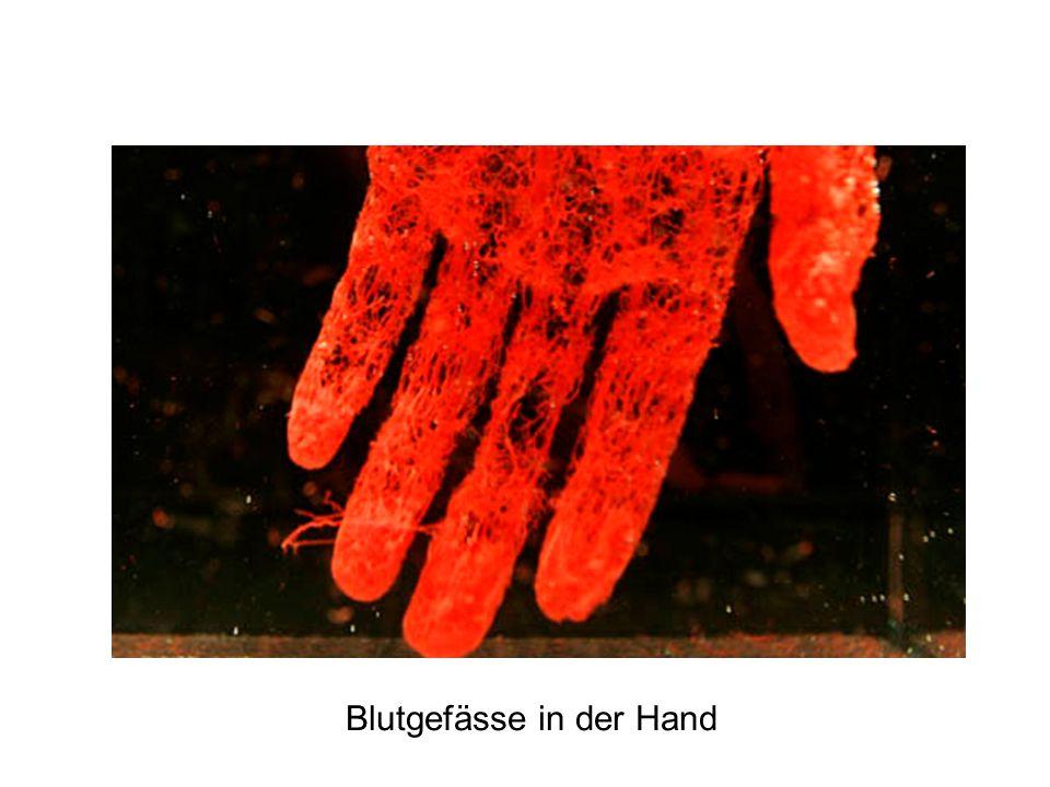 Blutgefässe in der Hand