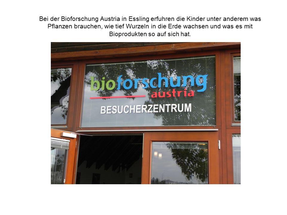 Bei der Bioforschung Austria in Essling erfuhren die Kinder unter anderem was Pflanzen brauchen, wie tief Wurzeln in die Erde wachsen und was es mit B