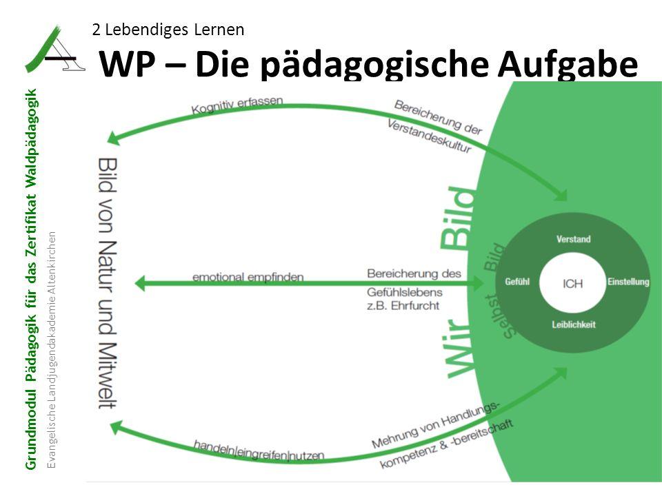 Grundmodul Pädagogik für das Zertifikat Waldpädagogik Evangelische Landjugendakademie Altenkirchen WP – Die pädagogische Aufgabe 16 2 Lebendiges Lerne