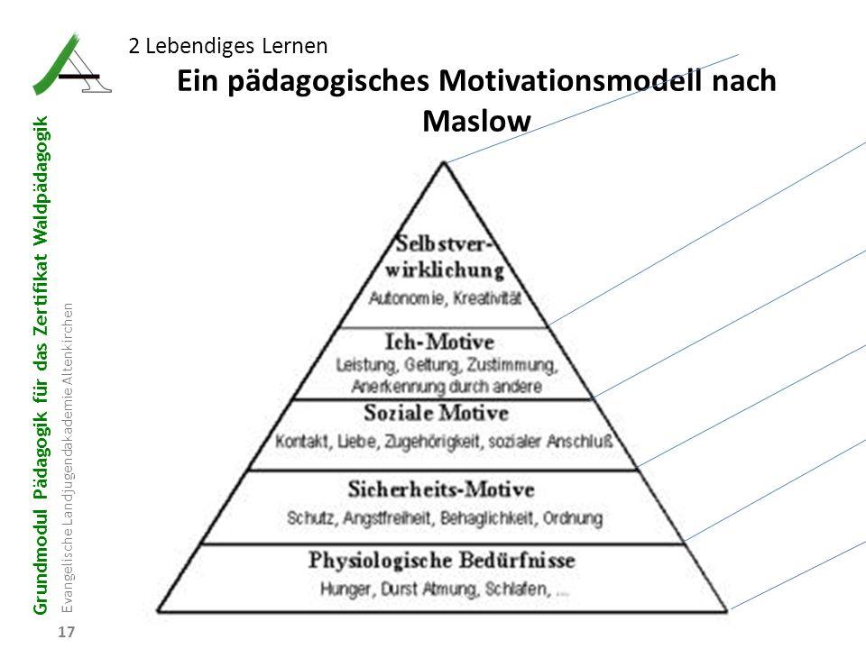 Grundmodul Pädagogik für das Zertifikat Waldpädagogik Evangelische Landjugendakademie Altenkirchen 17 2 Lebendiges Lernen Ein pädagogisches Motivation