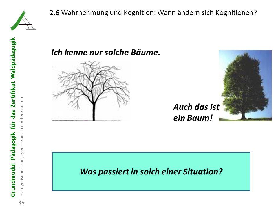 Grundmodul Pädagogik für das Zertifikat Waldpädagogik Evangelische Landjugendakademie Altenkirchen 35 2.6 Wahrnehmung und Kognition: Wann ändern sich