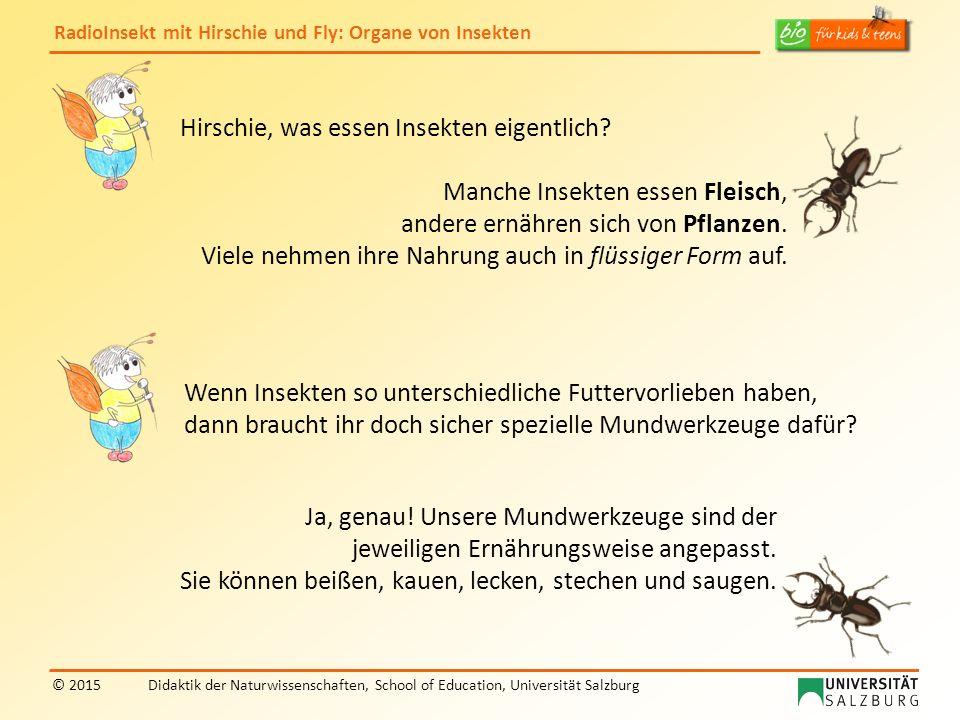 RadioInsekt mit Hirschie und Fly: Organe von Insekten © 2015Didaktik der Naturwissenschaften, School of Education, Universität Salzburg Hirschie, was essen Insekten eigentlich.