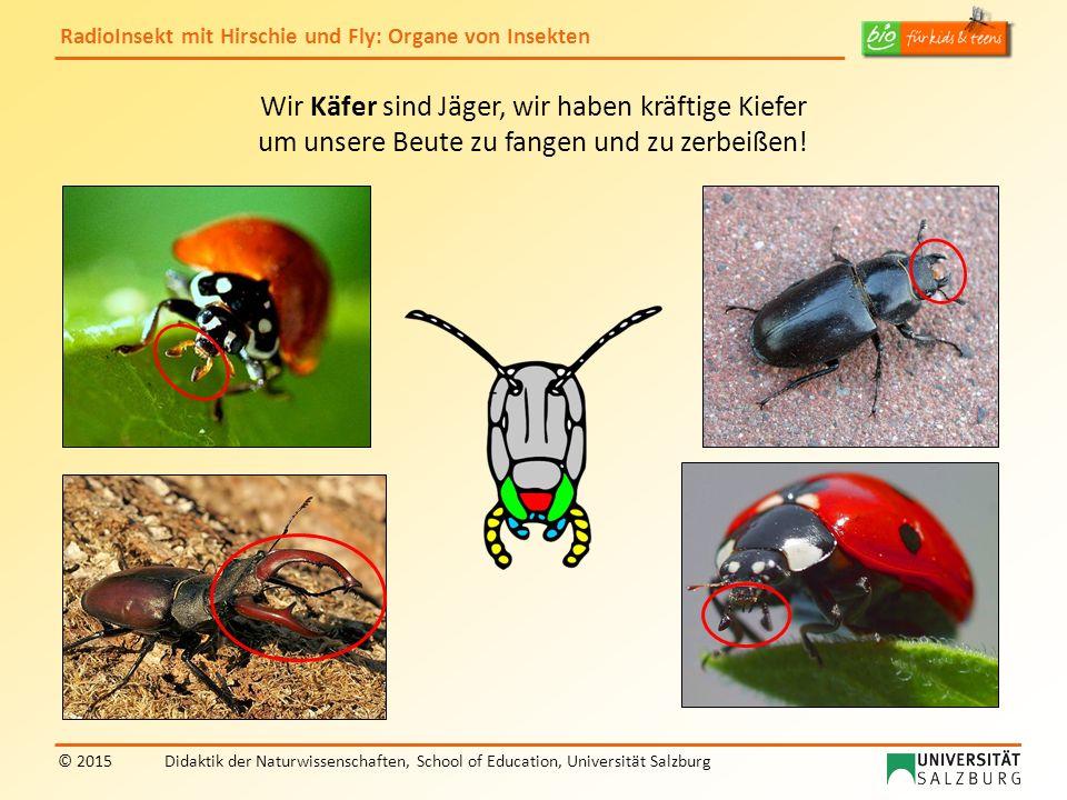 RadioInsekt mit Hirschie und Fly: Organe von Insekten © 2015Didaktik der Naturwissenschaften, School of Education, Universität Salzburg Wir Käfer sind Jäger, wir haben kräftige Kiefer um unsere Beute zu fangen und zu zerbeißen!