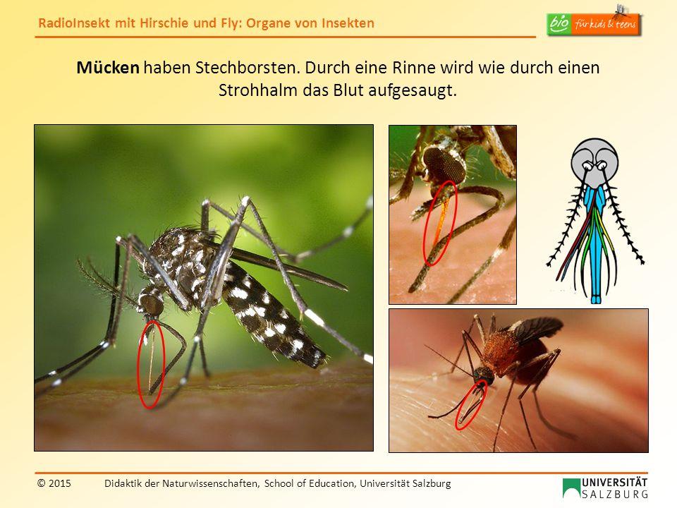 RadioInsekt mit Hirschie und Fly: Organe von Insekten © 2015Didaktik der Naturwissenschaften, School of Education, Universität Salzburg Mücken haben Stechborsten.