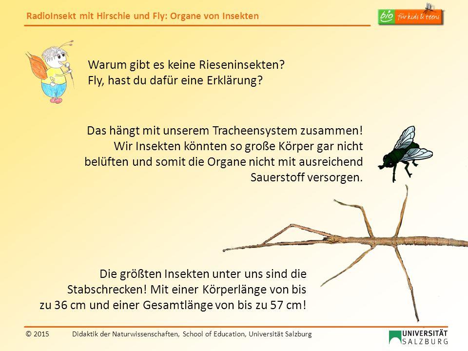 RadioInsekt mit Hirschie und Fly: Organe von Insekten © 2015Didaktik der Naturwissenschaften, School of Education, Universität Salzburg Warum gibt es keine Rieseninsekten.