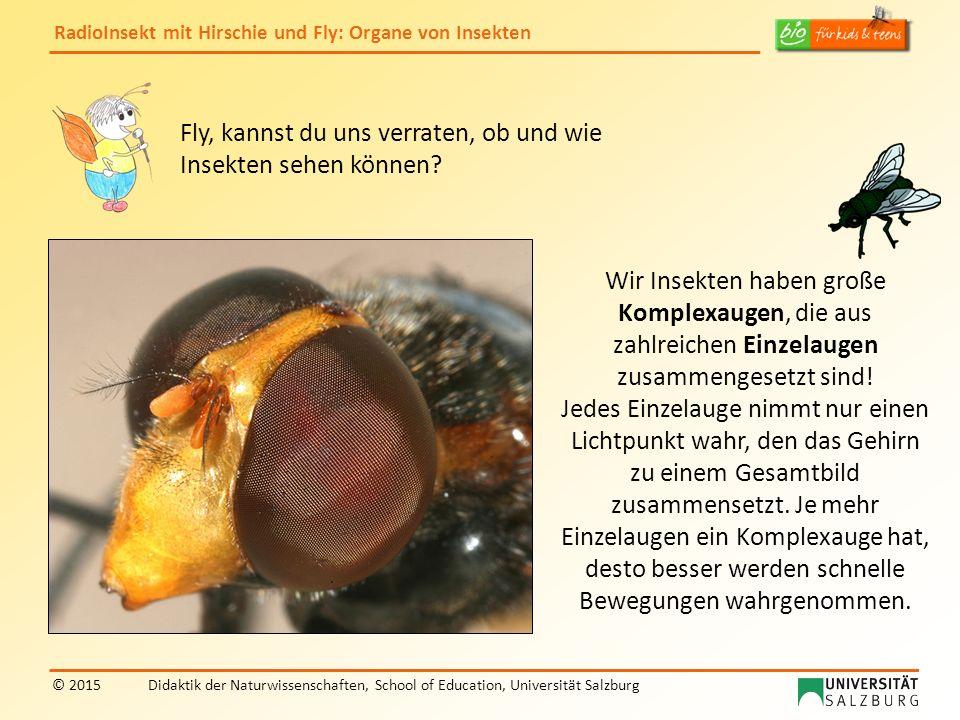 RadioInsekt mit Hirschie und Fly: Organe von Insekten © 2015Didaktik der Naturwissenschaften, School of Education, Universität Salzburg Fly, kannst du uns verraten, ob und wie Insekten sehen können.