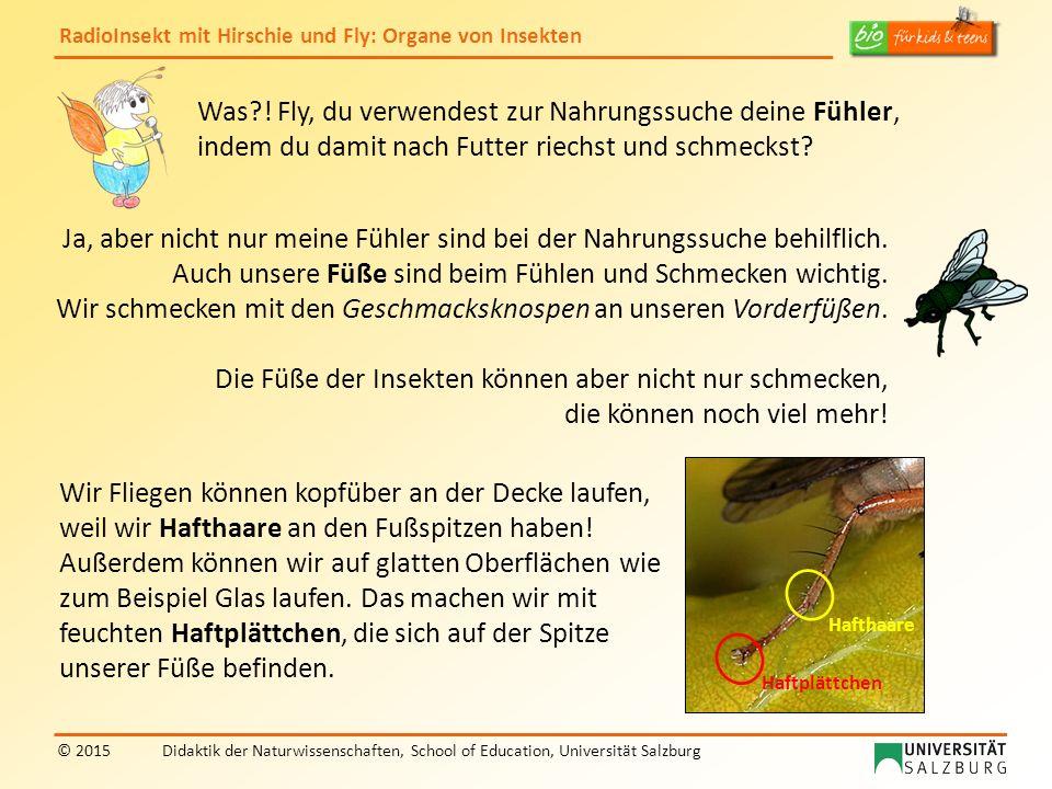 RadioInsekt mit Hirschie und Fly: Organe von Insekten © 2015Didaktik der Naturwissenschaften, School of Education, Universität Salzburg Was?! Fly, du