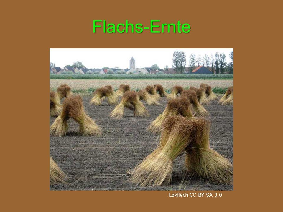 Flachs-Ernte Lokilech CC-BY-SA 3.0