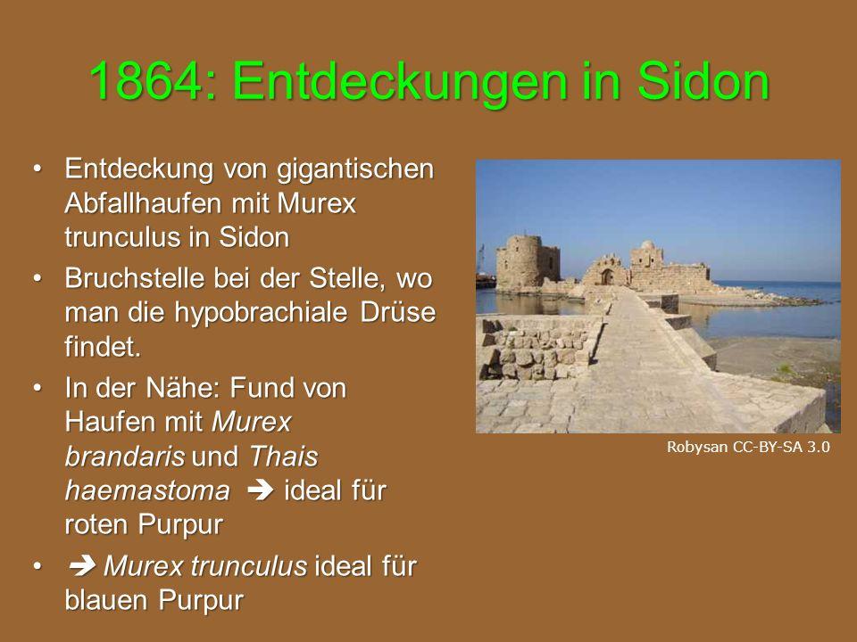 1864: Entdeckungen in Sidon Entdeckung von gigantischen Abfallhaufen mit Murex trunculus in SidonEntdeckung von gigantischen Abfallhaufen mit Murex trunculus in Sidon Bruchstelle bei der Stelle, wo man die hypobrachiale Drüse findet.Bruchstelle bei der Stelle, wo man die hypobrachiale Drüse findet.