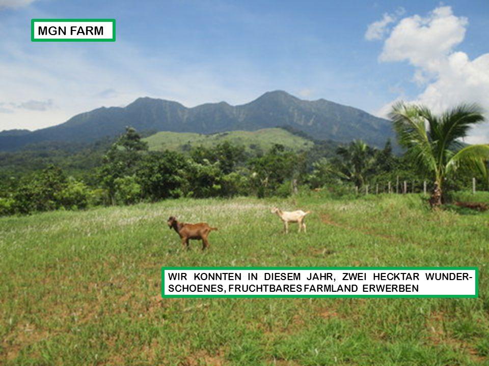 WIR KONNTEN IN DIESEM JAHR, ZWEI HECKTAR WUNDER- SCHOENES, FRUCHTBARES FARMLAND ERWERBEN MGN FARM