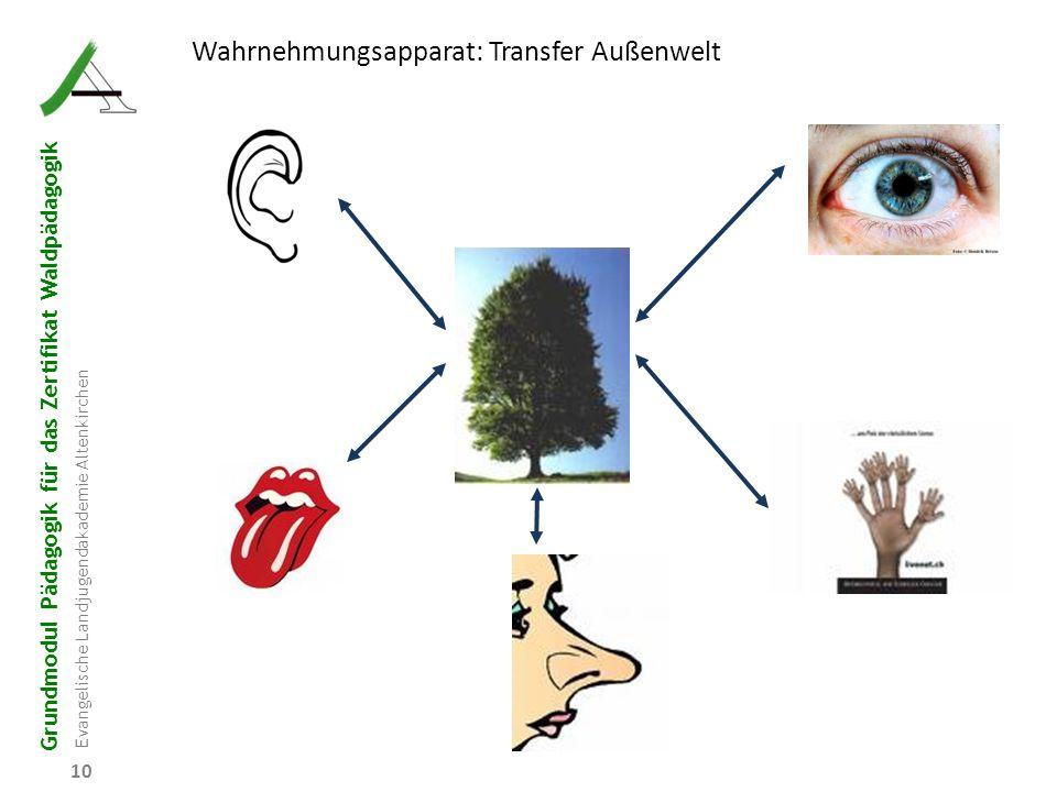 Grundmodul Pädagogik für das Zertifikat Waldpädagogik Evangelische Landjugendakademie Altenkirchen 10 Wahrnehmungsapparat: Transfer Außenwelt