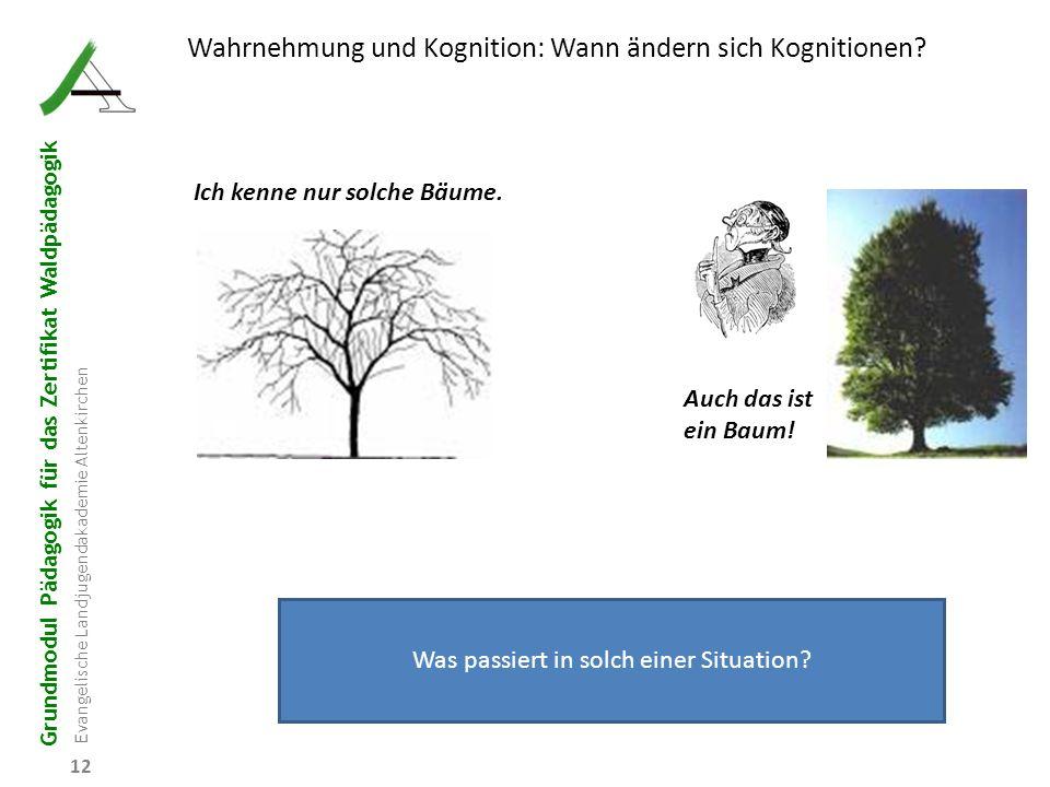 Grundmodul Pädagogik für das Zertifikat Waldpädagogik Evangelische Landjugendakademie Altenkirchen 12 Wahrnehmung und Kognition: Wann ändern sich Kogn