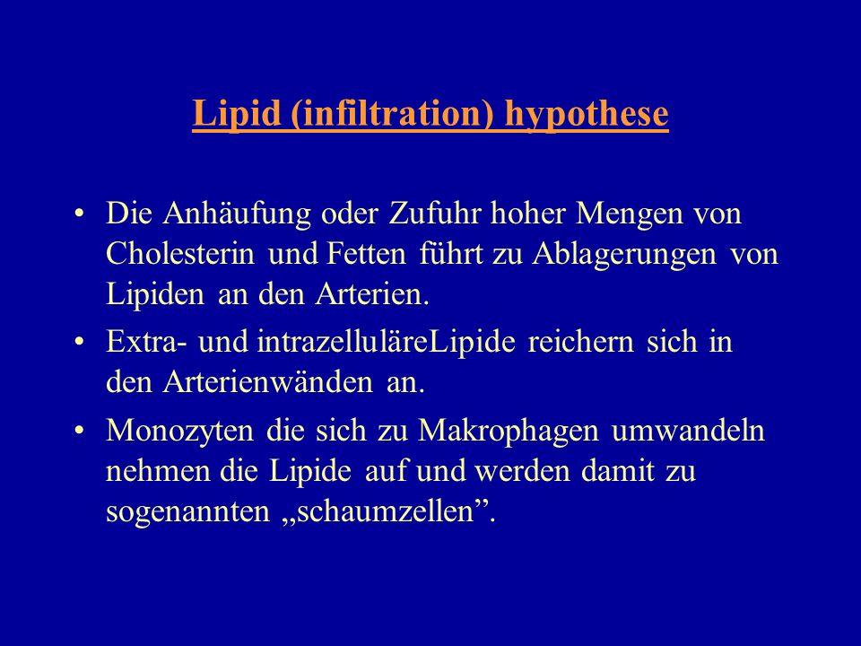 Die Anhäufung oder Zufuhr hoher Mengen von Cholesterin und Fetten führt zu Ablagerungen von Lipiden an den Arterien. Extra- und intrazelluläreLipide r