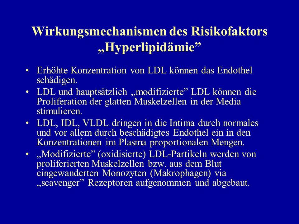 """Wirkungsmechanismen des Risikofaktors """"Hyperlipidämie"""" Erhöhte Konzentration von LDL können das Endothel schädigen. LDL und hauptsätzlich """"modifiziert"""