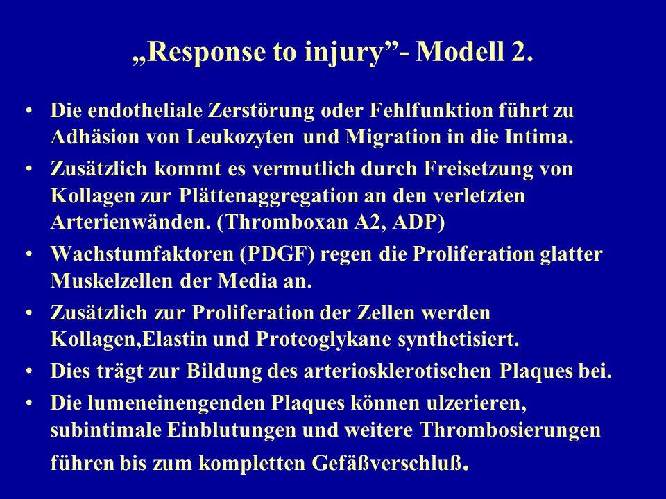"""""""Response to injury""""- Modell 2. Die endotheliale Zerstörung oder Fehlfunktion führt zu Adhäsion von Leukozyten und Migration in die Intima. Zusätzlich"""