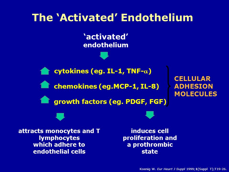 CELLULAR ADHESION MOLECULES induces cell proliferation and a prothrombic state 'activated' endothelium attracts monocytes and T lymphocytes which adhere to endothelial cells cytokines (eg.