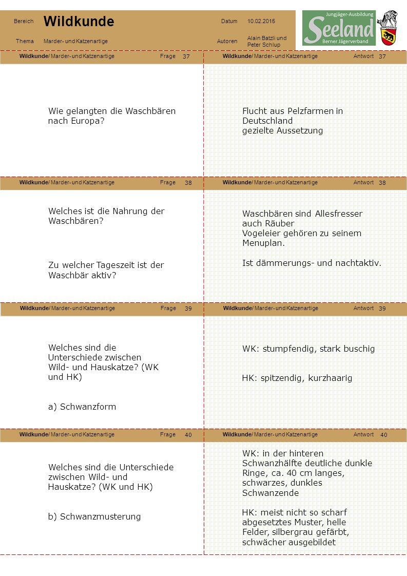 Wildkunde/ Marder- und KatzenartigeFrageWildkunde/ Marder- und KatzenartigeAntwort Wildkunde/ Marder- und KatzenartigeFrageWildkunde/ Marder- und KatzenartigeAntwort Wildkunde/ Marder- und KatzenartigeFrageWildkunde/ Marder- und KatzenartigeAntwort Wildkunde/ Marder- und KatzenartigeFrageWildkunde/ Marder- und KatzenartigeAntwort Bereich Wildkunde Datum10.02.2015 ThemaMarder- und KatzenartigeAutoren Alain Batzli und Peter Schlup 37 38 40 39 38 39 40 Wie gelangten die Waschbären nach Europa.
