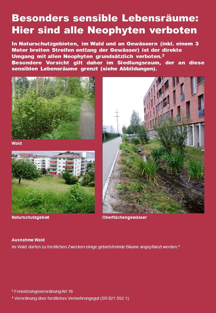 Besonders sensible Lebensräume: Hier sind alle Neophyten verboten In Naturschutzgebieten, im Wald und an Gewässern (inkl.