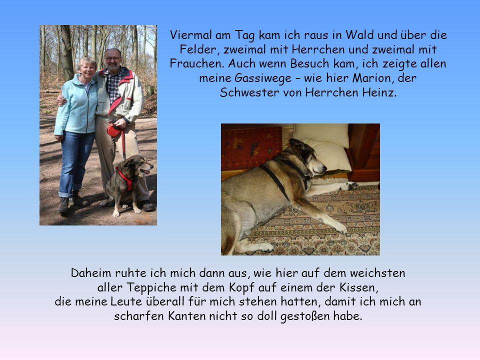 Gleich nach drei Monaten gings nach Flachau in den Skiurlaub – das Tollste für einen Husky-Schäferhund-Mix!
