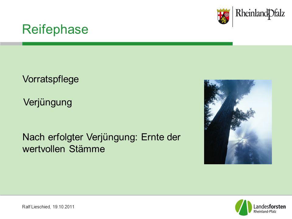 Ralf Lieschied, 19.10.2011 Reifephase Nach erfolgter Verjüngung: Ernte der wertvollen Stämme Vorratspflege Verjüngung