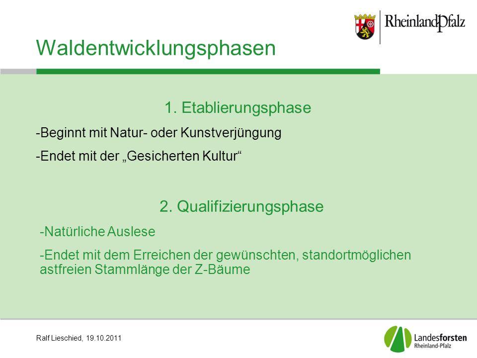"""Ralf Lieschied, 19.10.2011 Waldentwicklungsphasen 1. Etablierungsphase -Beginnt mit Natur- oder Kunstverjüngung -Endet mit der """"Gesicherten Kultur"""" 2."""