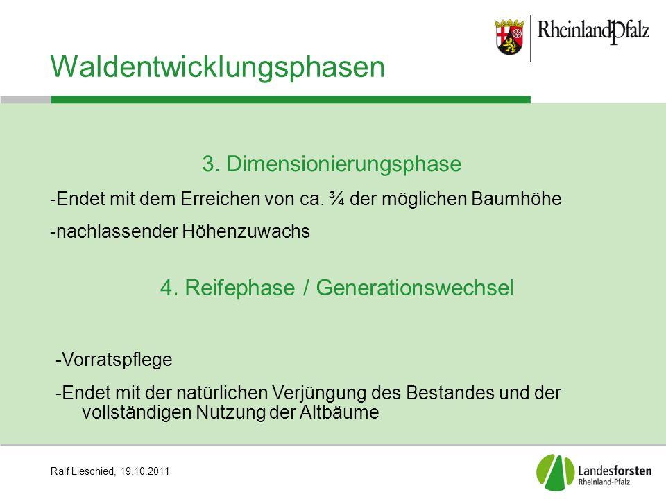 Ralf Lieschied, 19.10.2011 Waldentwicklungsphasen 3. Dimensionierungsphase -Endet mit dem Erreichen von ca. ¾ der möglichen Baumhöhe -nachlassender Hö