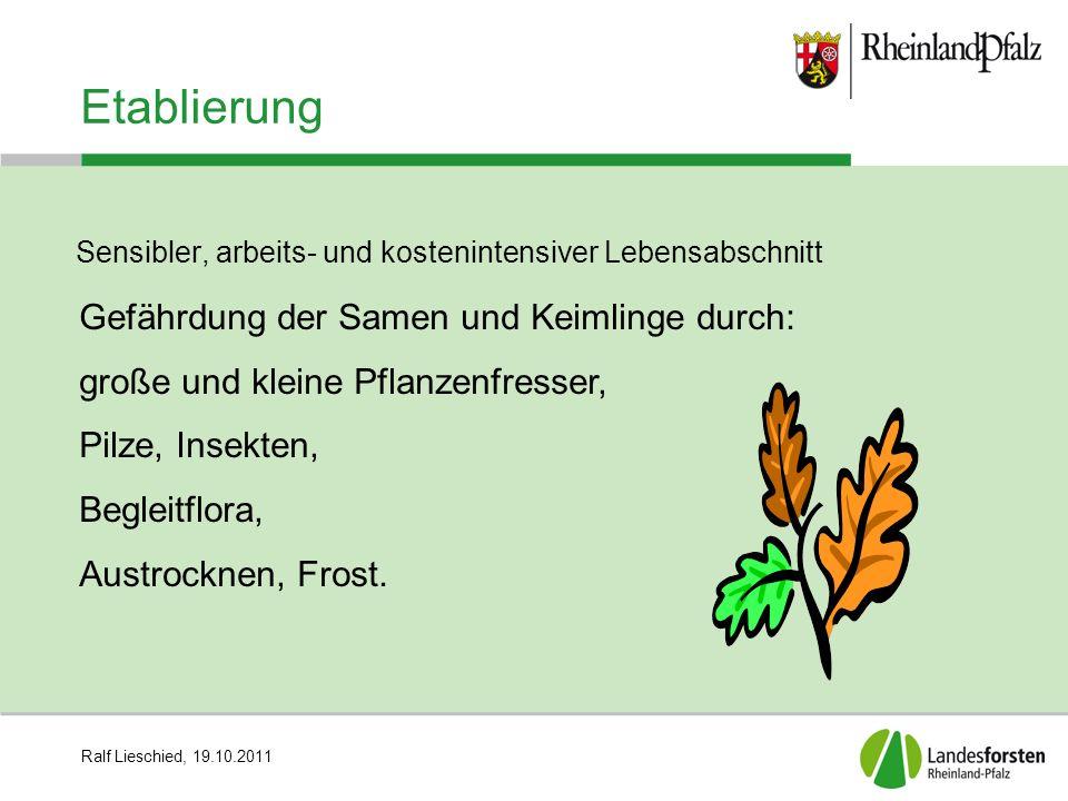 Ralf Lieschied, 19.10.2011 Etablierung Sensibler, arbeits- und kostenintensiver Lebensabschnitt Gefährdung der Samen und Keimlinge durch: große und kl