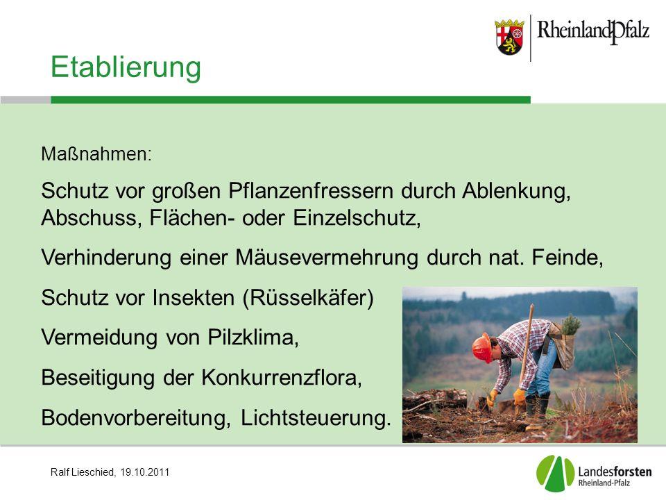 Ralf Lieschied, 19.10.2011 Etablierung Maßnahmen: Schutz vor großen Pflanzenfressern durch Ablenkung, Abschuss, Flächen- oder Einzelschutz, Verhinderu