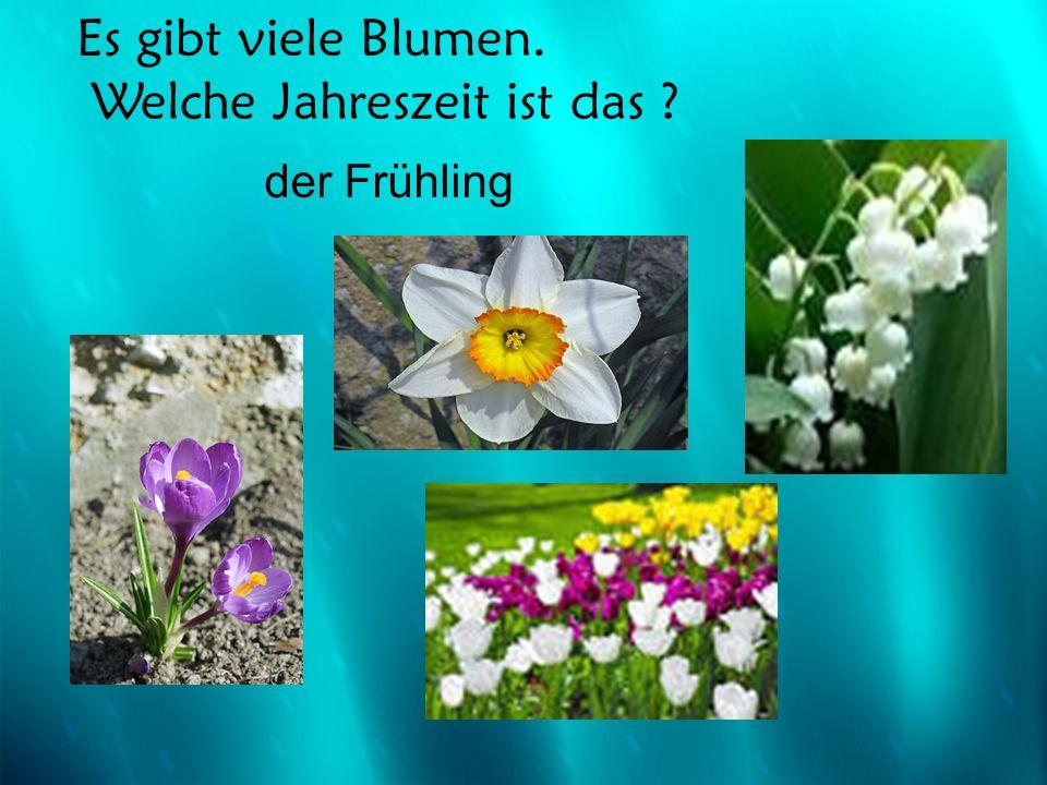 Es gibt viele Blumen. Welche Jahreszeit ist das ? der Frühling