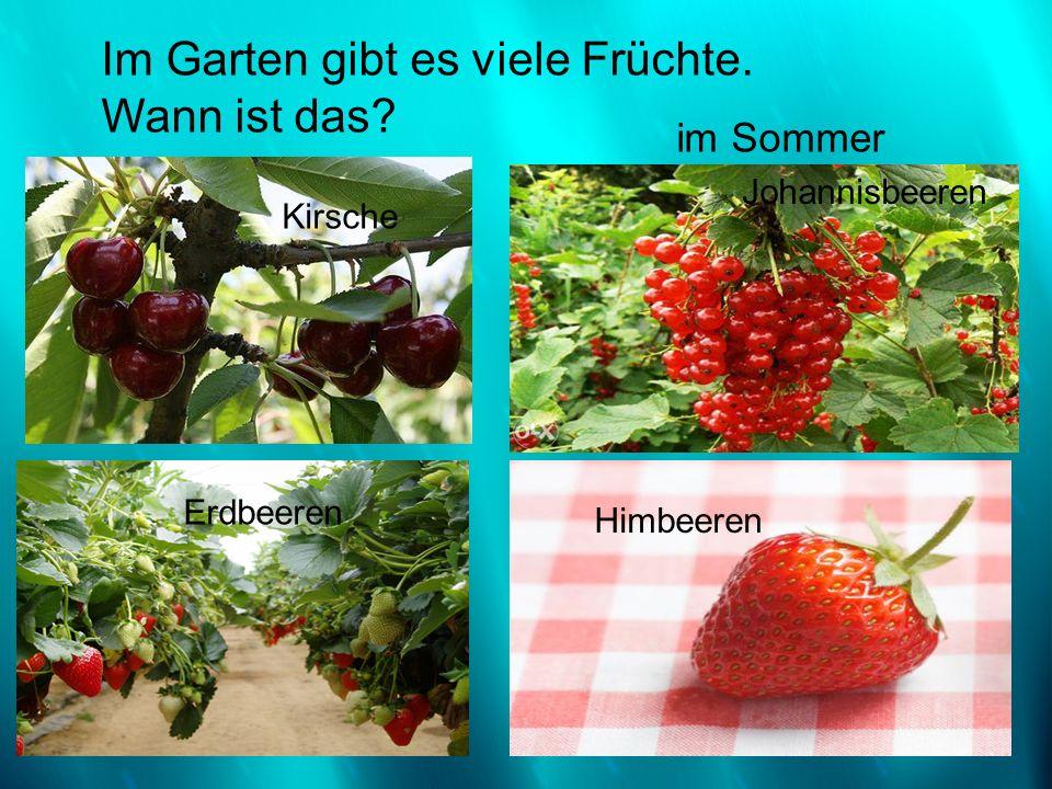 Kirsche Im Garten gibt es viele Früchte. Wann ist das? Erdbeeren Himbeeren Johannisbeeren im Sommer